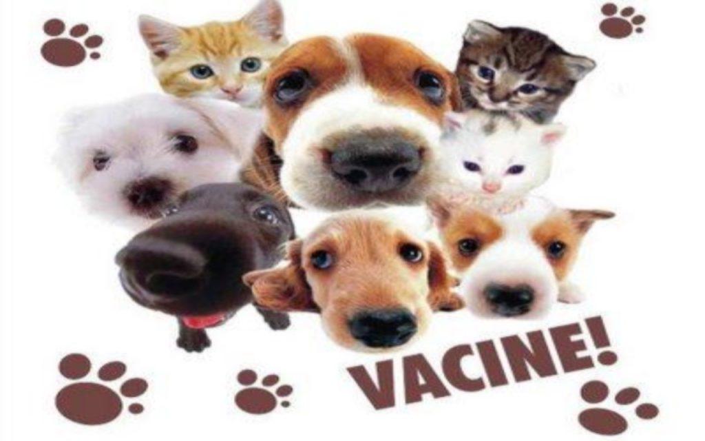 Campanha de Vacinação 2018