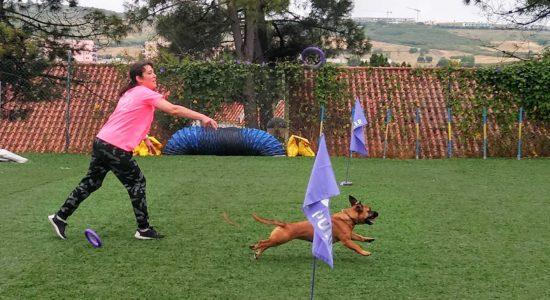 Dog Puller – estrelas caninas buscam troféu do Nacional em Ourém
