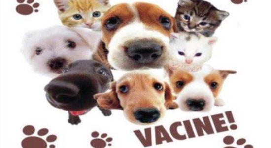 Campanha de Vacinação 2019