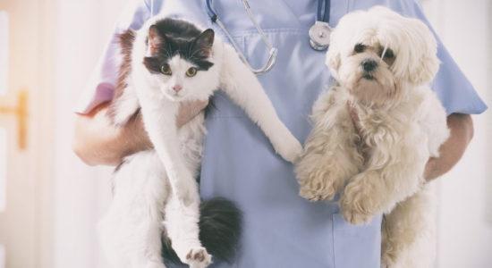 Município de Ourém apoia esterilização de animais de companhia