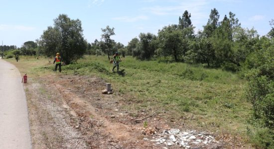 Aviso – Trabalhos de corte de árvores e limpeza de mato